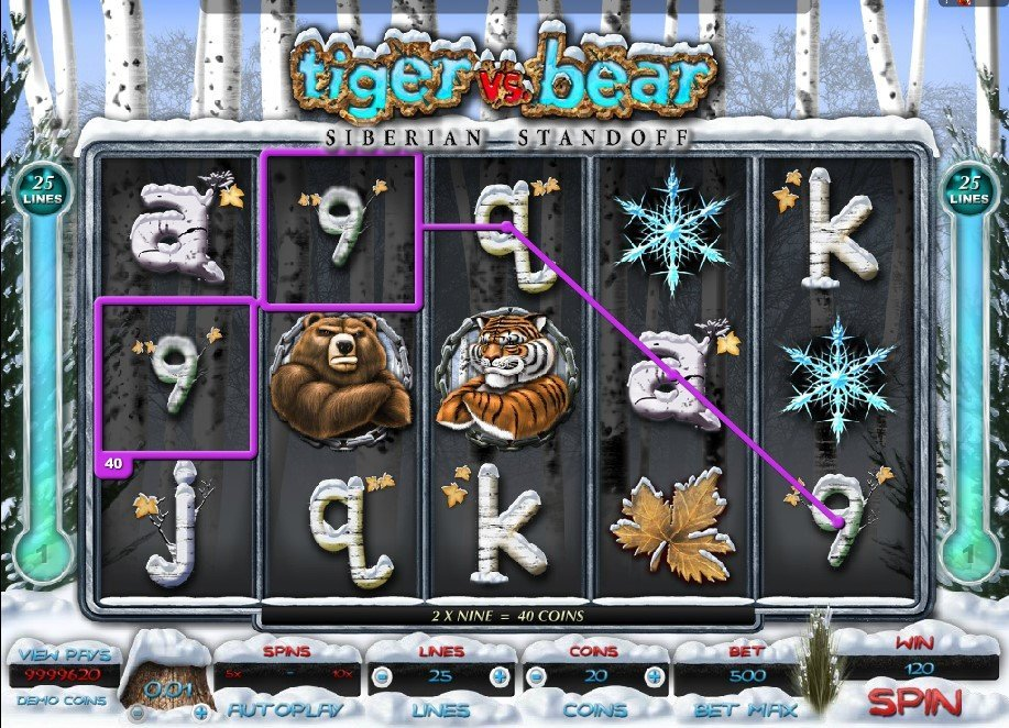 Tiger Vs Bear Slot Review