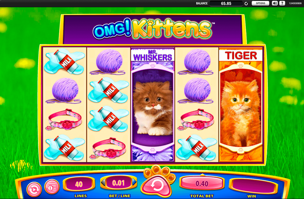 Omg Kittens Slot Review